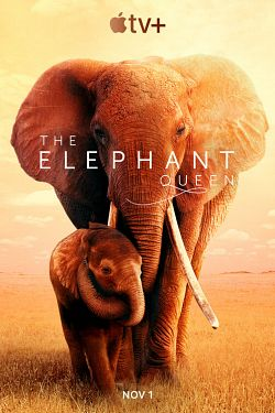 telecharger The Elephant Queen 2019 DOC FRENCH HDRip XviD-EXTREME torrent9